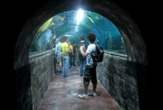 Ogrenciler bir akvaryumu ziyaret ediyorlar